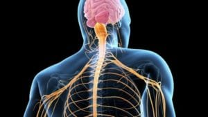 Internal nervous system where Peripheral Neuropathy begins